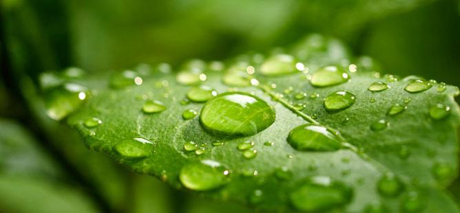 Water on leaves